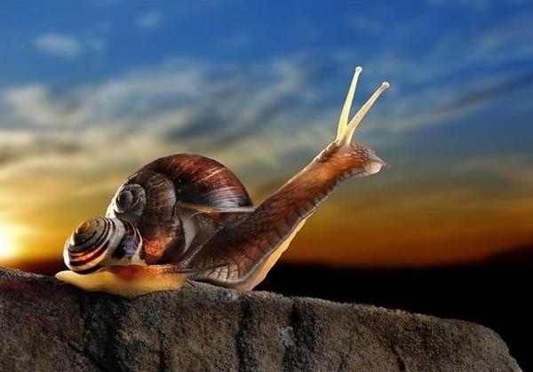 Les escargots - Page 2 07423d91