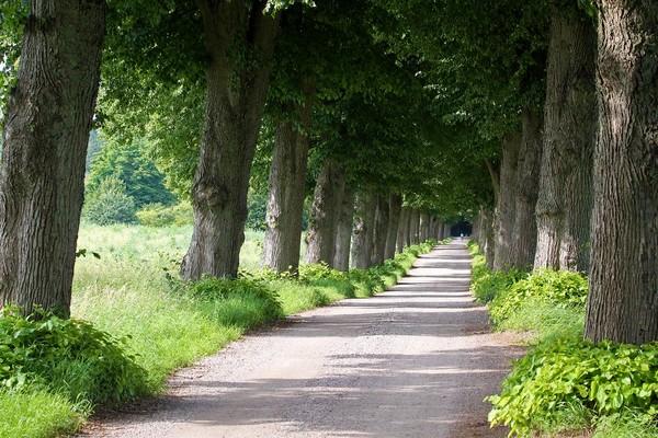 çisil Den Doğa Resimler Dağlı Ve Ormanlı Yol Resimleri 16 Arkaplan