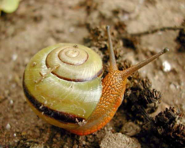 Les escargots 1b2af0e0