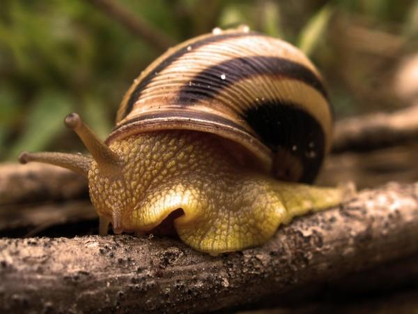 Les escargots - Page 2 2491acc3