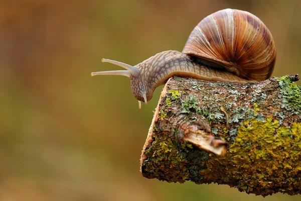 Les escargots 2b4087f6
