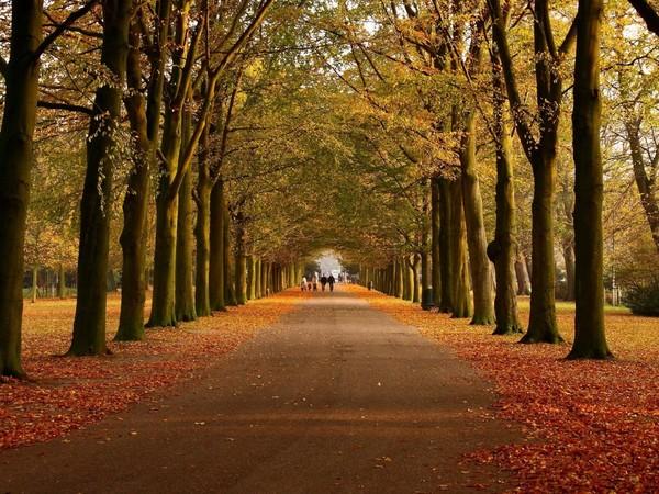 Yol Manzara Resimleri Koyu Renk Ağaçlı Yol Resimleri Koyu Renk