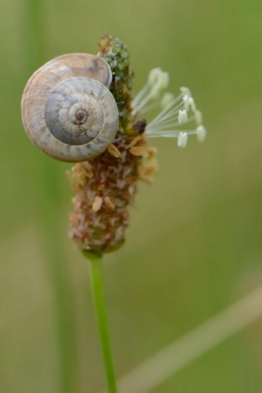 Les escargots 34d794ae