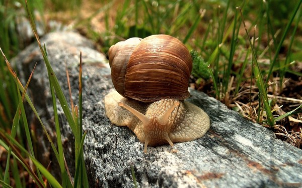 Les escargots - Page 2 4c554583