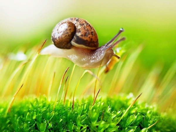 Les escargots 4ceffa27