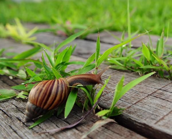 Les escargots - Page 2 5a6a7414