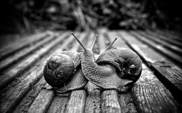 Les escargots 6d023e46