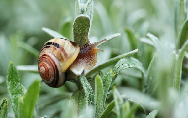 Les escargots - Page 2 71217683