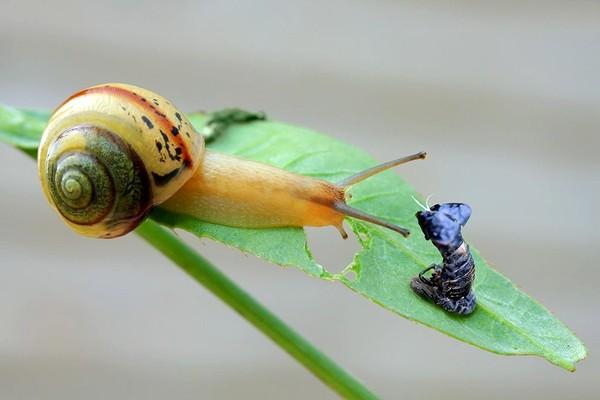 Les escargots 71b12a2b