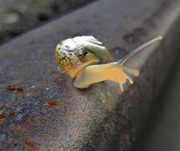 Les escargots - Page 2 75ccec60