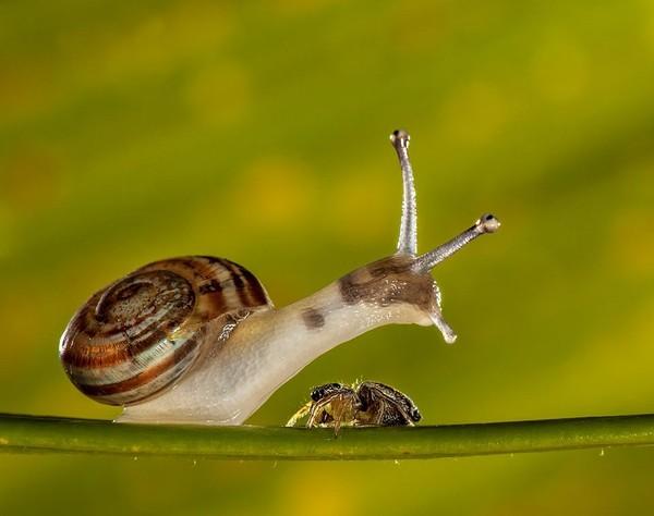 Les escargots 9d9f0037