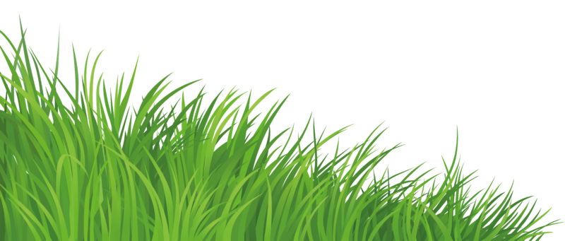 Grass Element Png Clipart Picture