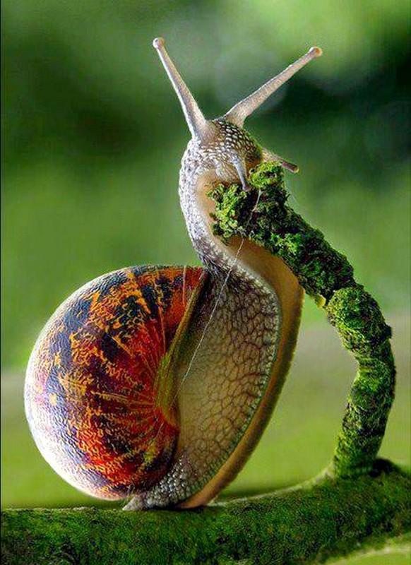 Les escargots - Page 3 A2855502