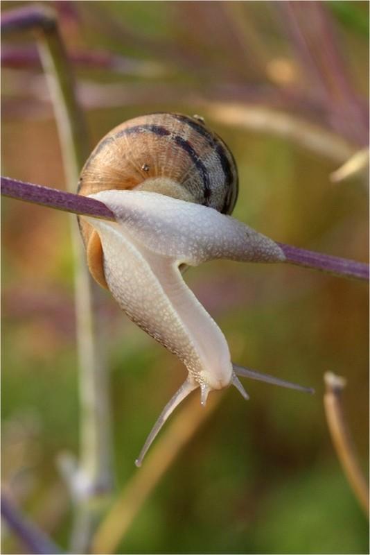 Les escargots - Page 2 A7e3760b