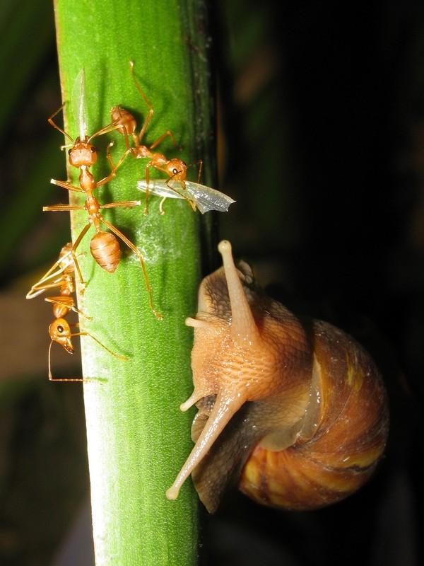 Les escargots - Page 3 Ade288b4