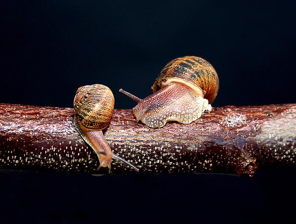 Les escargots - Page 2 Cc55c807