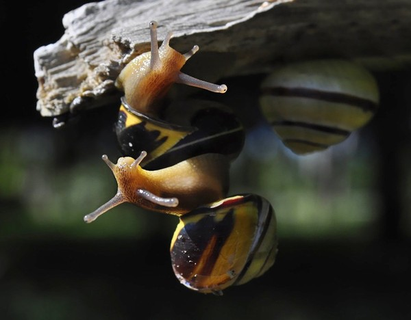 Les escargots Cef3827c