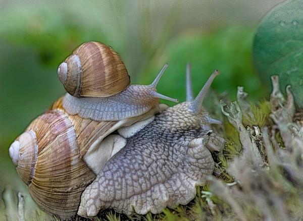 Les escargots - Page 2 E0c68671