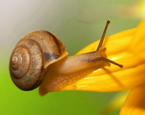 Les escargots - Page 2 E3a662d8