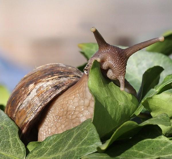 Les escargots E43d679c