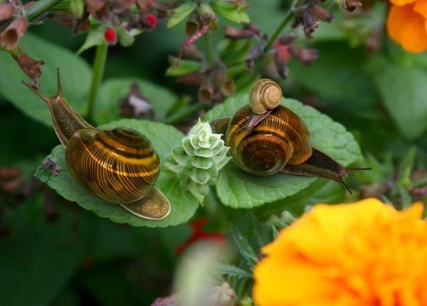 Les escargots E7f3d15f