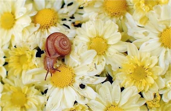 Les escargots F97d5384