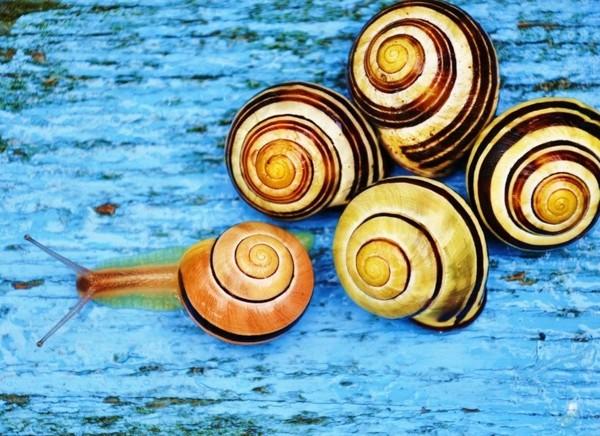 Les escargots Fa054932