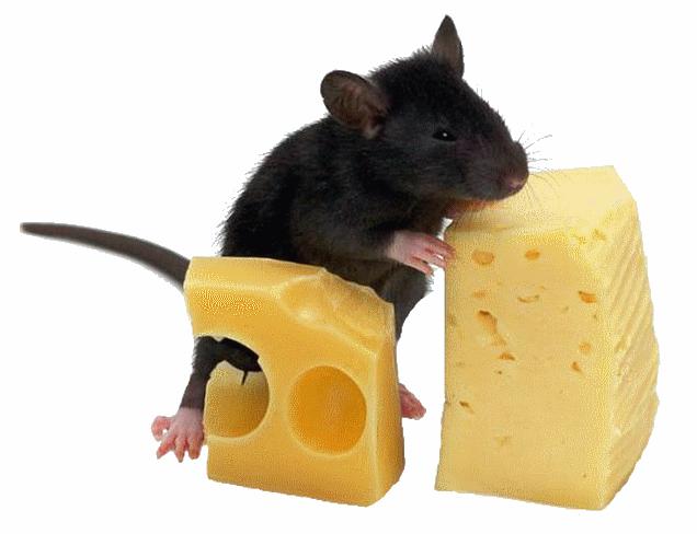 souris rats page 6. Black Bedroom Furniture Sets. Home Design Ideas
