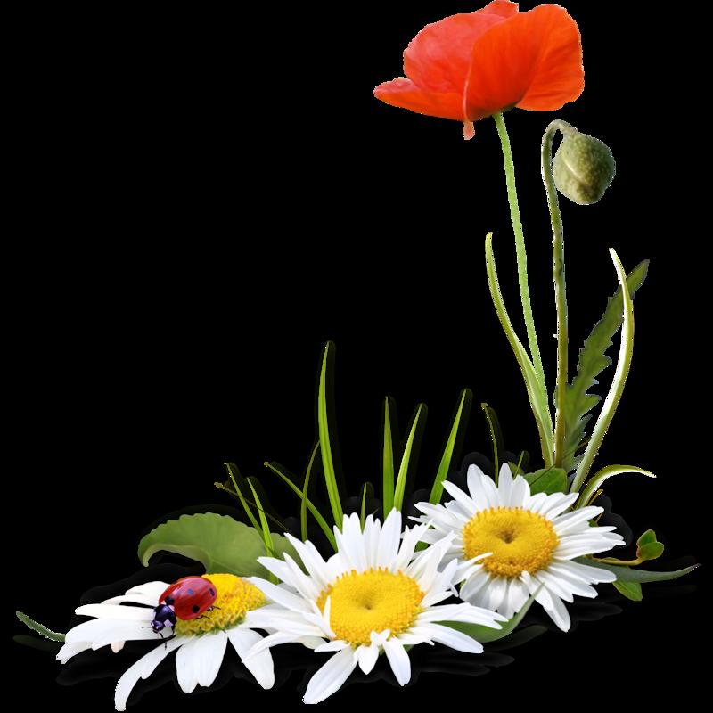 Résultat d'images pour Gifs fleurs des champs